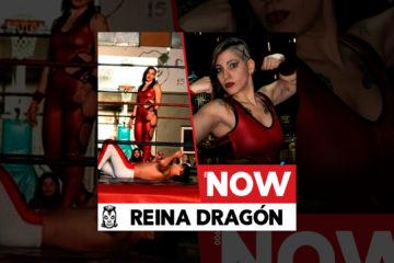 Reina Dragón